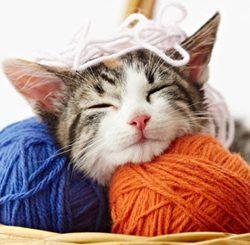 Caring-kitten