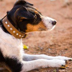 Pet Behavioural Advice