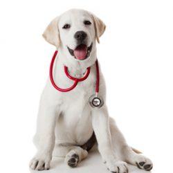 Pet Ultrasound